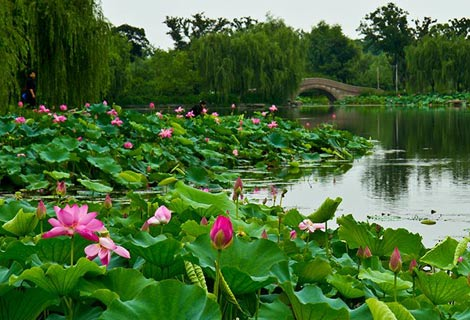 蓮池湖公園